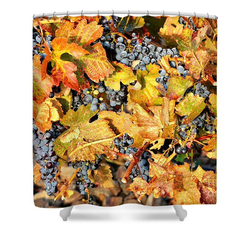 Grapes Shower Curtain featuring the photograph Fall Grapes by Carol Groenen