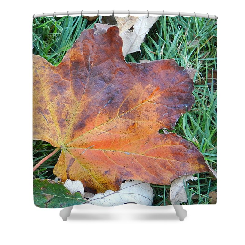 Leaf Shower Curtain featuring the photograph Fall In Leaf by Cathy Anderson