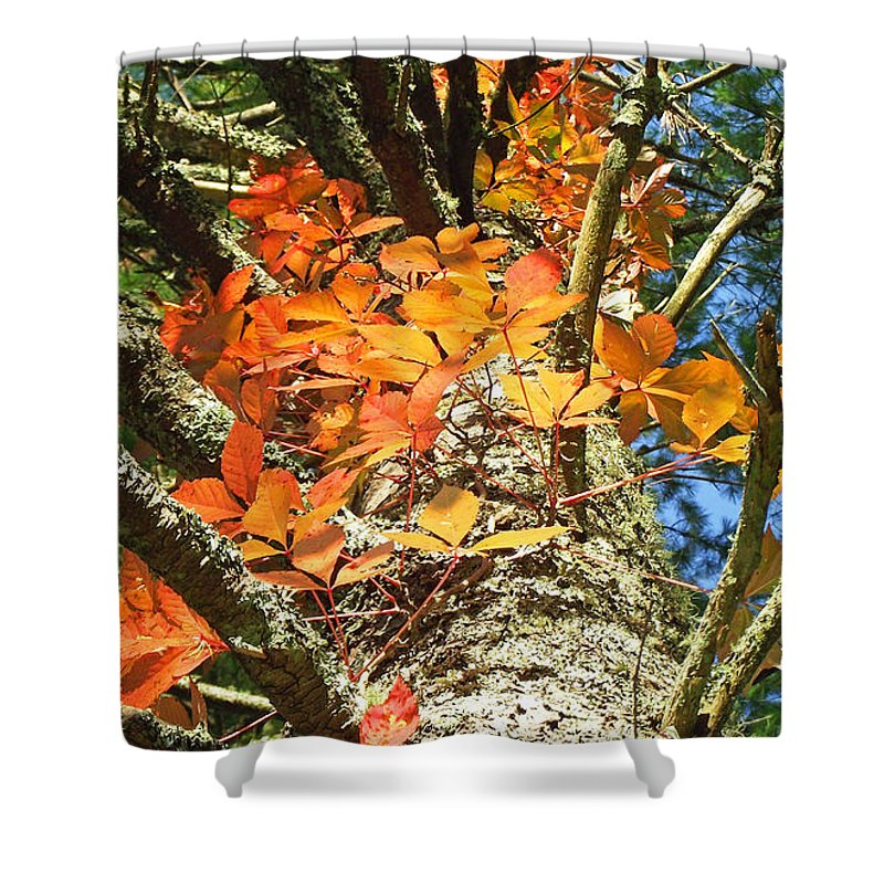 Duane Mccullough Shower Curtain featuring the photograph Fall Ivy On Pine Tree by Duane McCullough