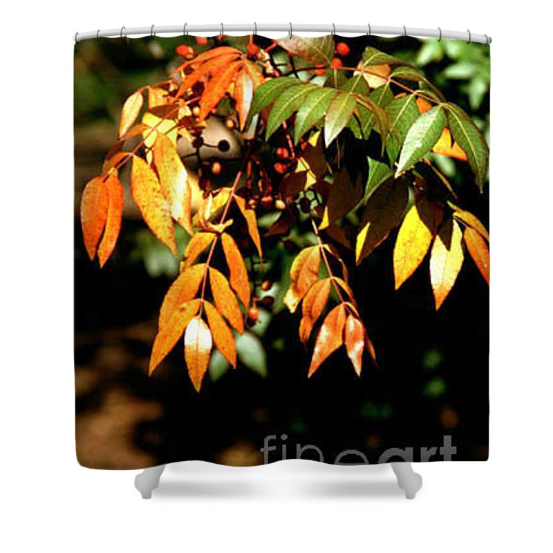 Fall Color Shower Curtain featuring the photograph Fall Leaves by Kathy McClure