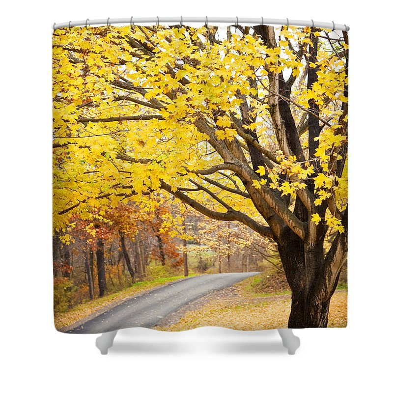 Fall Shower Curtain featuring the photograph Fall Road by Sharon Dominick