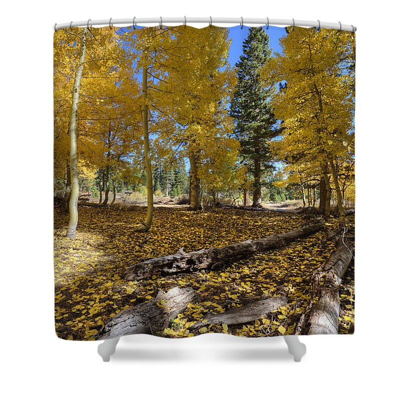 Fall Shower Curtain featuring the photograph Fall Splendor by Dianne Phelps