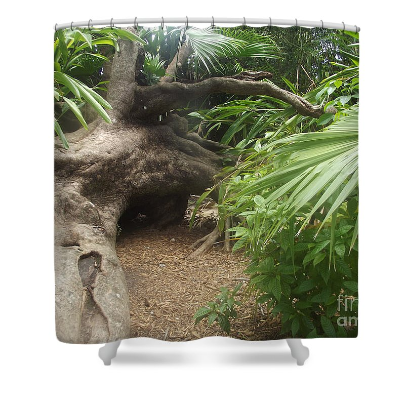 Tree Shower Curtain featuring the photograph Fallen Giant by Jennifer Lavigne
