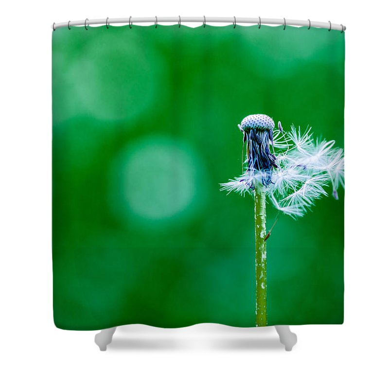Abstract Shower Curtain featuring the photograph Fallen Off Dandelion - Featured 3 by Alexander Senin