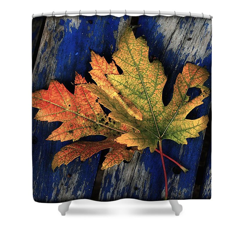 Nature Shower Curtain featuring the photograph Falling For Colour by Linda Sannuti