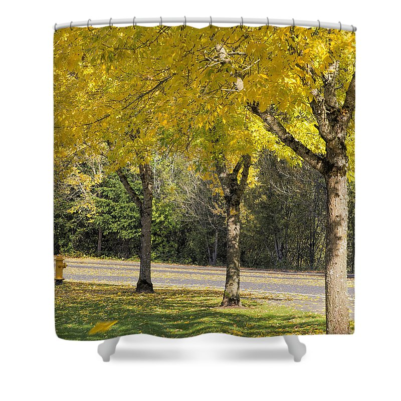 Yellow Shower Curtain featuring the photograph Falling Leaves From Neighborhood Beech Trees by Jit Lim