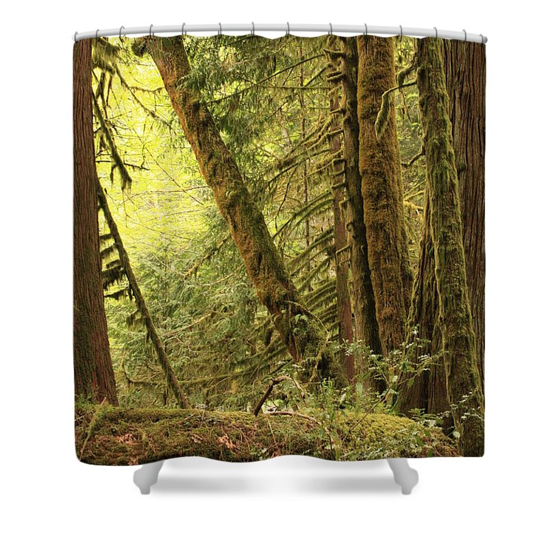 Washington State Shower Curtain featuring the photograph Falling Trees In The Rainforest by Carol Groenen
