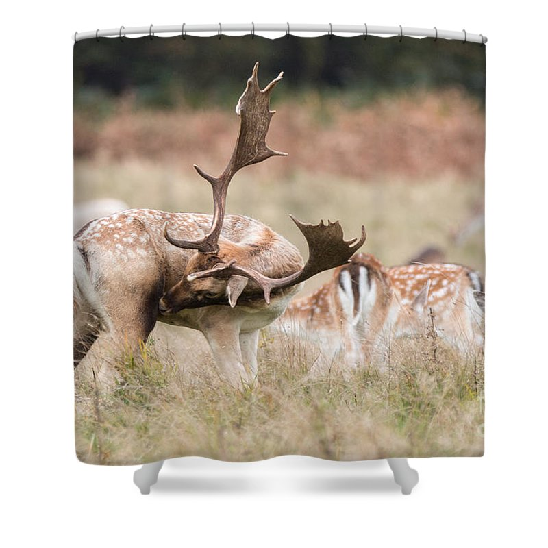 Cervidae Shower Curtain featuring the photograph Fallow Deer - Amazing Antlers by Jivko Nakev