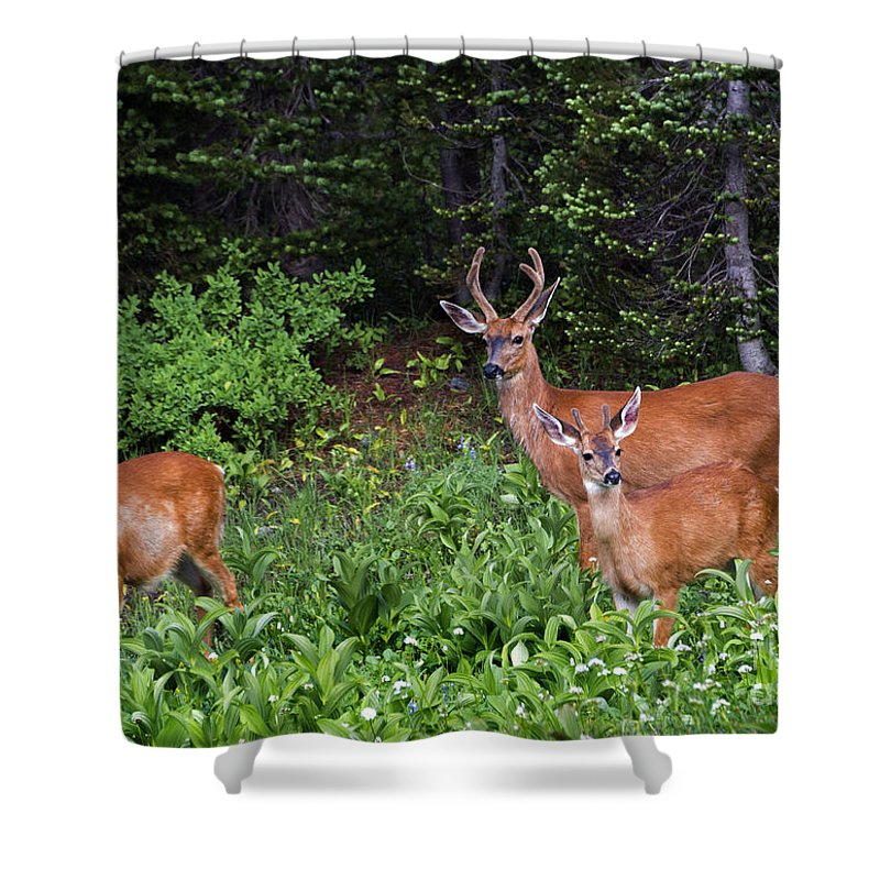 Deer Shower Curtain featuring the photograph Family Dinner by Mike Dawson