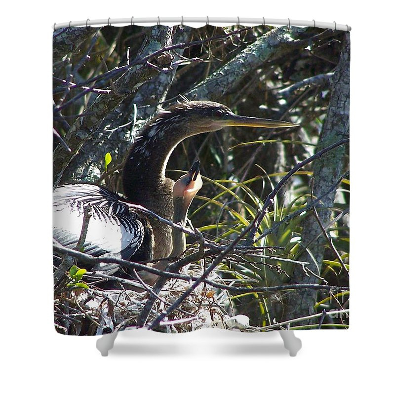 Anhinga Shower Curtain featuring the photograph Family Time by Edna Weber