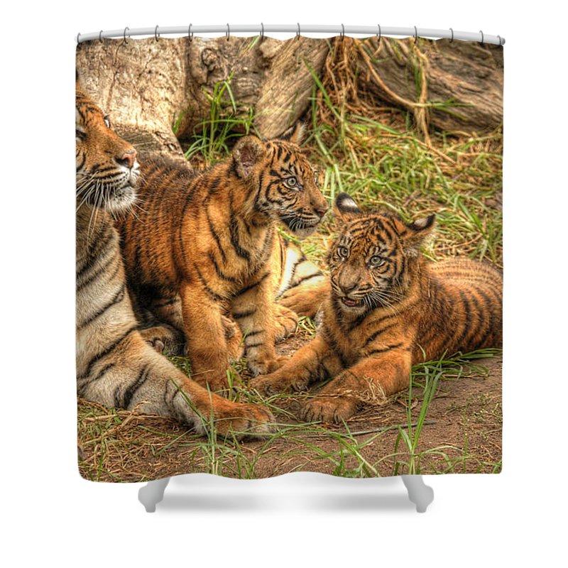 Tiger Shower Curtain featuring the photograph Tiger Family by Traci Law