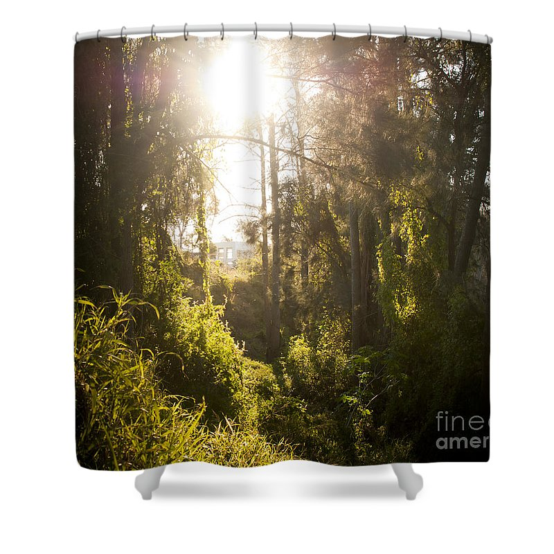 Autumn Shower Curtain featuring the photograph Fantasy Forest by Tim Hester
