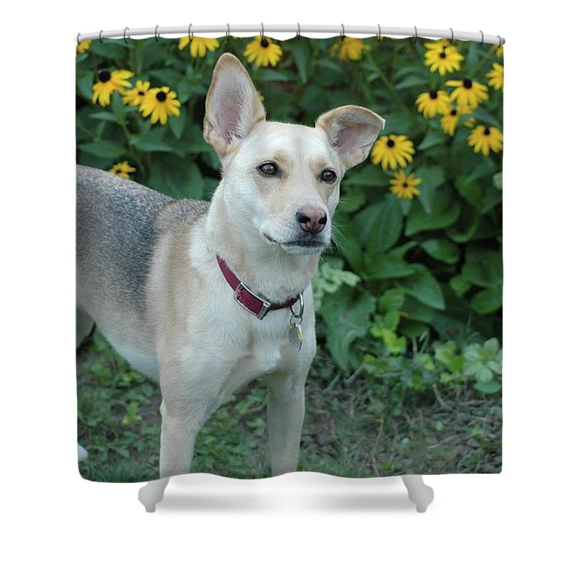 Dog Shower Curtain featuring the photograph Fawn And The Flowers by Kathleen Struckle