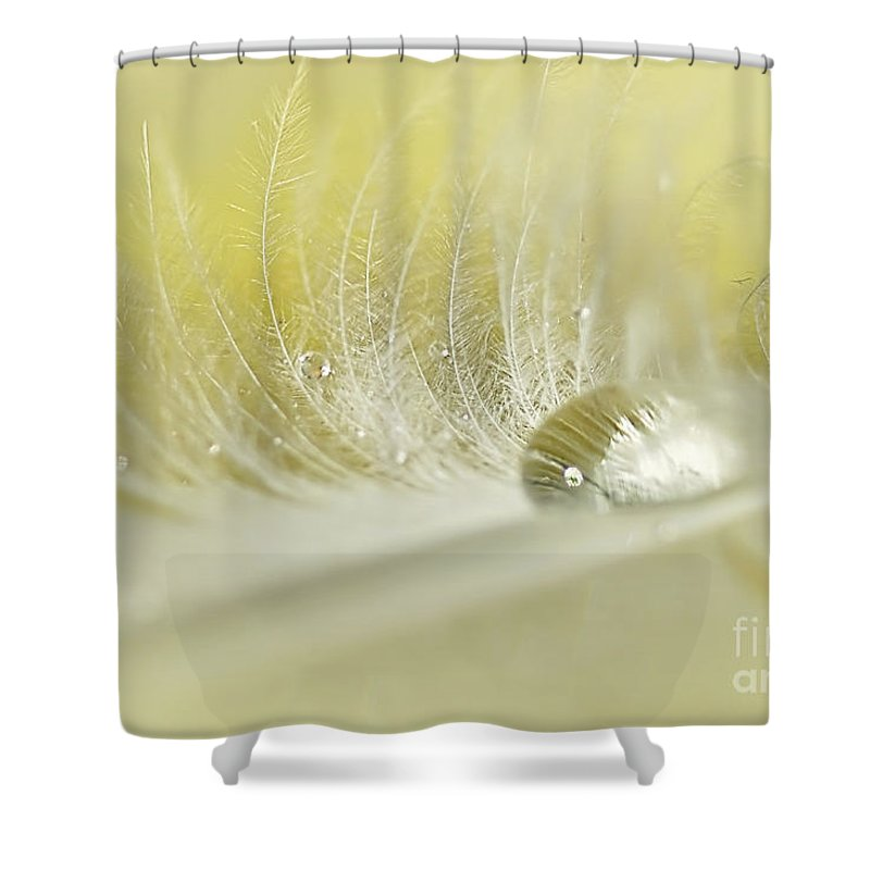 Photography Shower Curtain featuring the photograph Feathered Softness by Kaye Menner