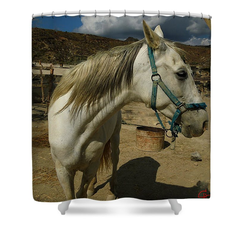 Colette Shower Curtain featuring the photograph Featured Cute Friend In The Mountain Spain by Colette V Hera Guggenheim