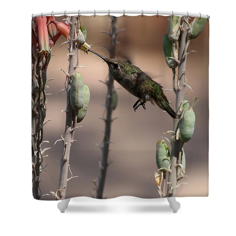 Hummingbird Shower Curtain featuring the photograph Female Anna's Hummingbird by Christiane Schulze Art And Photography