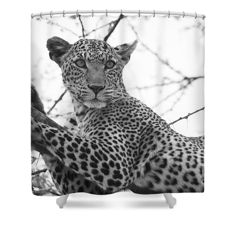 2012 Shower Curtain featuring the photograph Female Leopard by Howard Kennedy