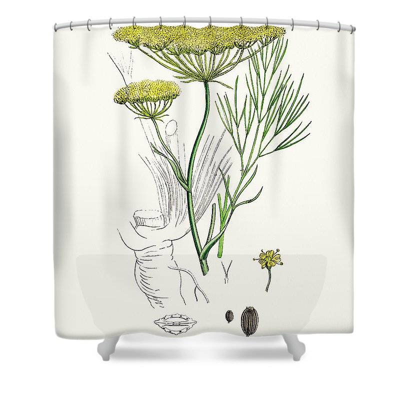 White Background Shower Curtain featuring the digital art Fennel Plant Scientific Illustration by Mashuk