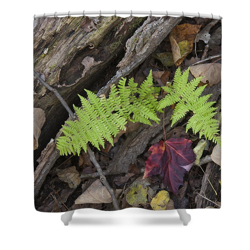 Fern Shower Curtain featuring the photograph Fern And Maple Leaves Maine Img 6182 by Greg Kluempers
