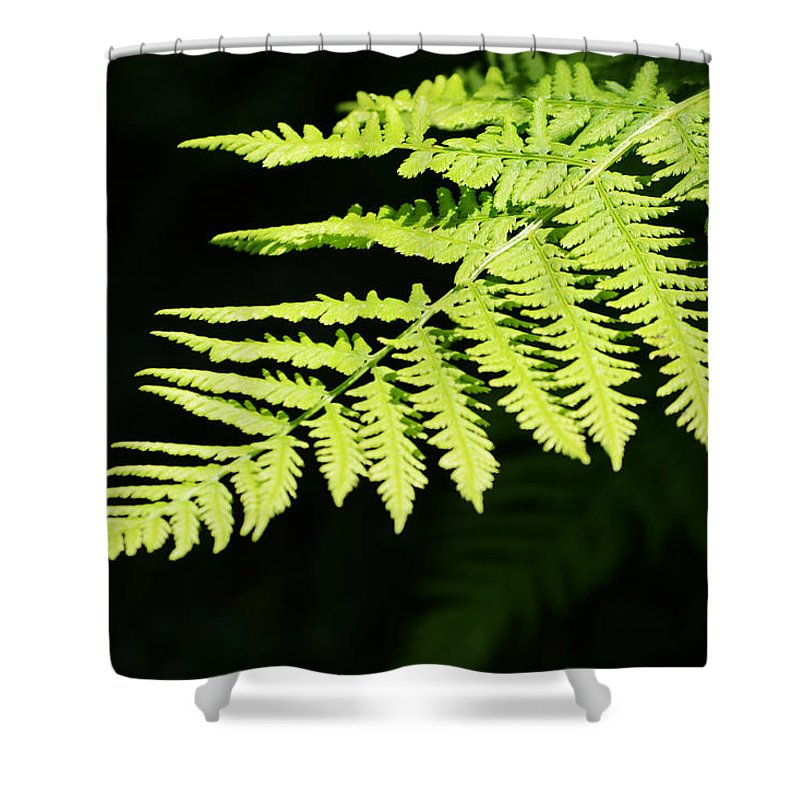 Fern Shower Curtain featuring the photograph Fern by Kim Hymes