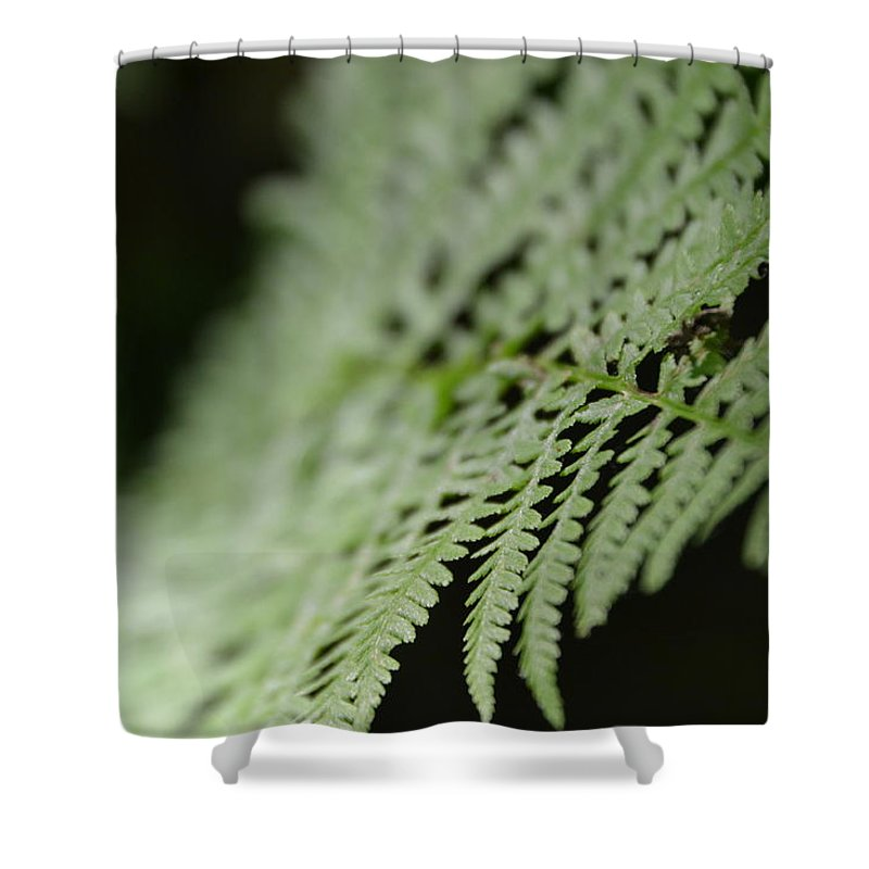 Shower Curtain featuring the photograph Fern Leaf by Katerina Naumenko