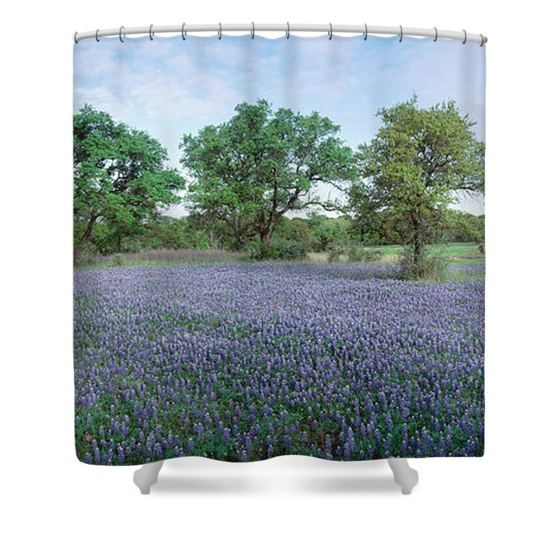 Photography Shower Curtain featuring the photograph Field Of Bluebonnet Flowers, Texas, Usa by Panoramic Images