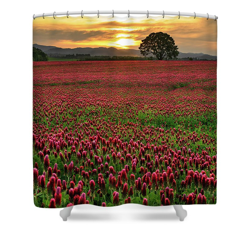 Scenics Shower Curtain featuring the photograph Field Of Crimson Clover With Lone Oak by Jason Harris