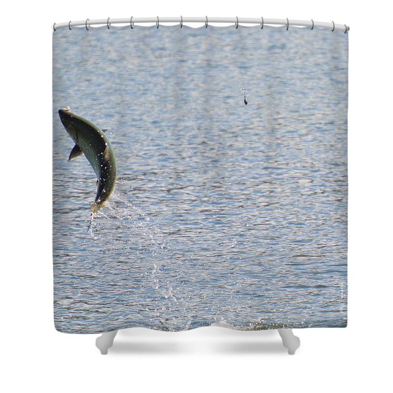 Chinook Salmon Shower Curtain featuring the photograph Fighting Chinook Salmon by Mike Dawson