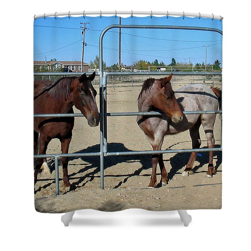 Fillies Shower Curtain featuring the photograph Fillies At The Gate by Linda Feinberg