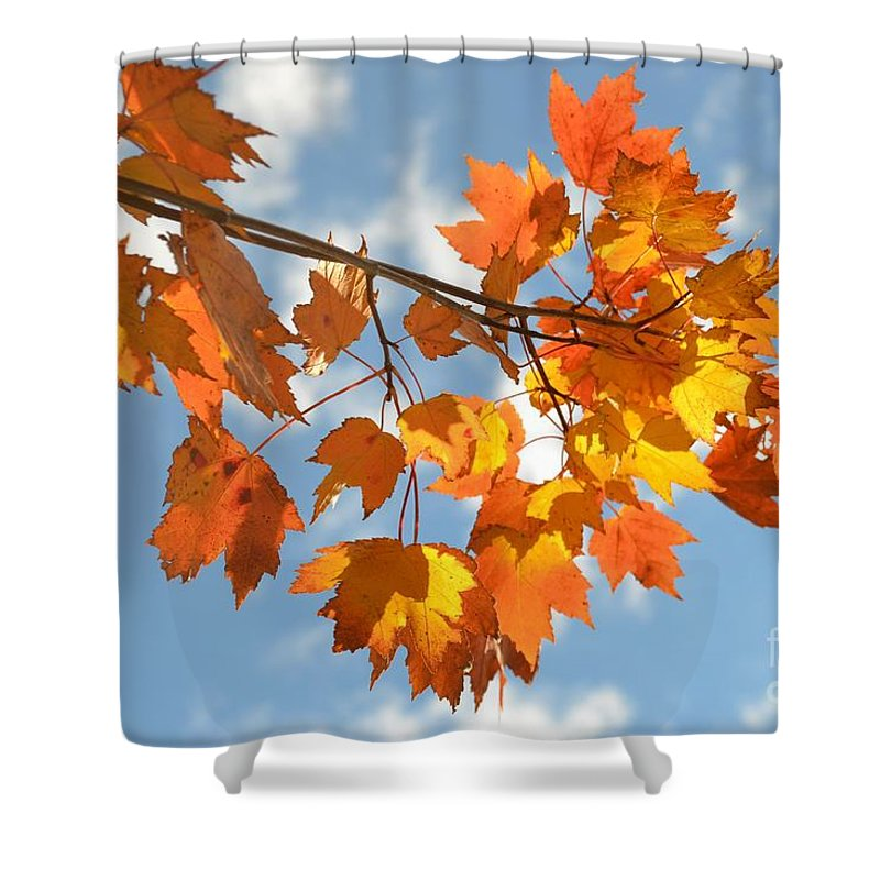Fall Shower Curtain featuring the photograph Fire In The Sky - Autumn Leaves One by Miriam Danar