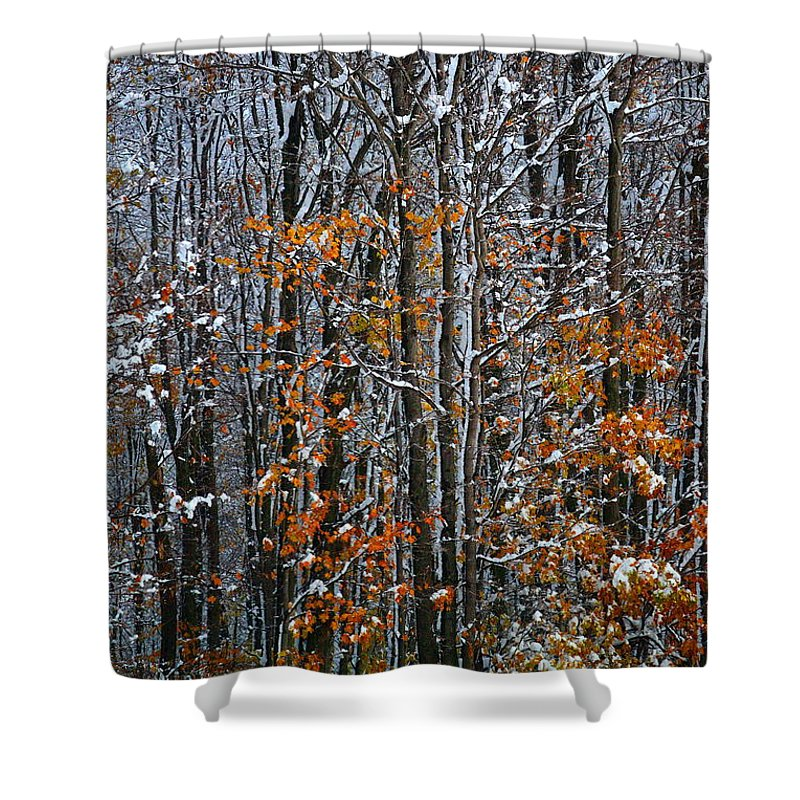 Snow Shower Curtain featuring the photograph First Snow 3 by April Patterson