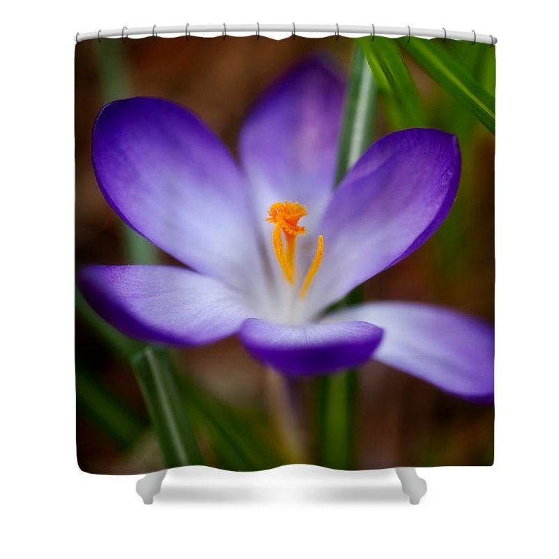 Beauty In Nature Shower Curtain featuring the photograph First Spring Crocus by Venetta Archer