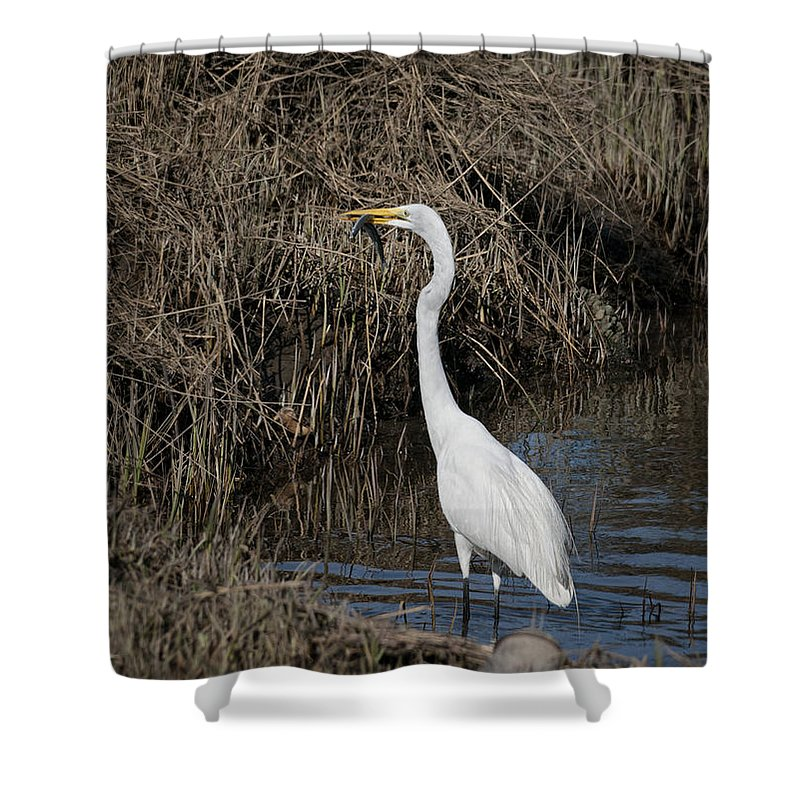 Snowy Egret Shower Curtain featuring the photograph Fish For Dinner by Betty Depee