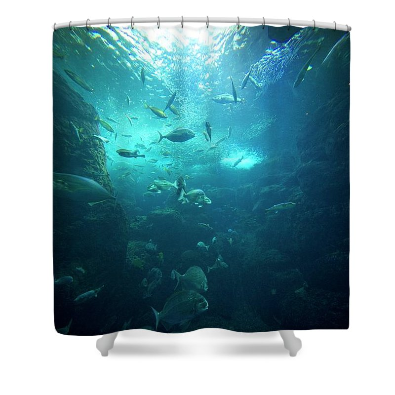 Underwater Shower Curtain featuring the photograph Fishes by By Tddch