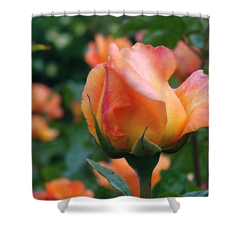 Rose Shower Curtain featuring the photograph Fit For A Queen by Rona Black