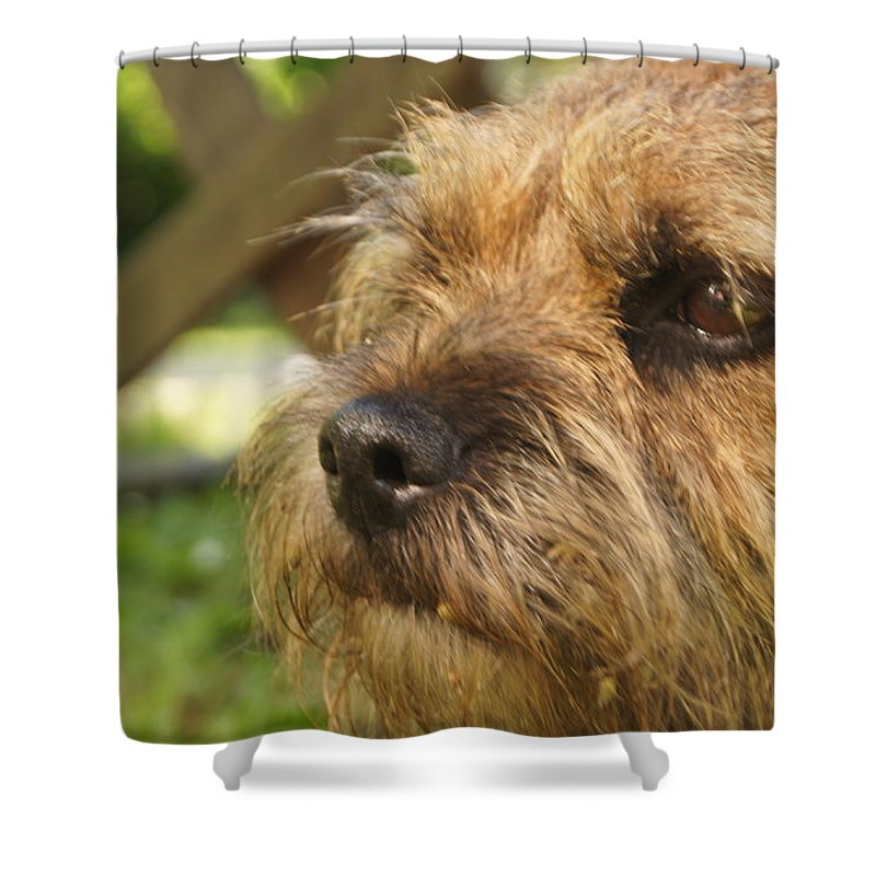 Border Terrier Shower Curtain featuring the photograph Fizzy On Al In Dorset 2010 by Simon Kennedy