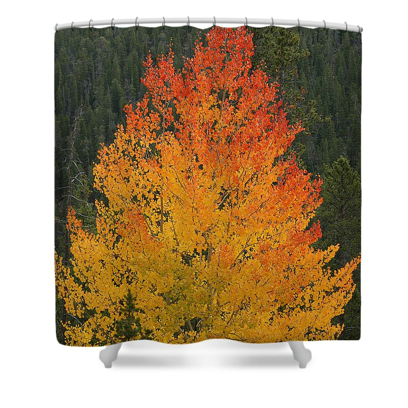 Fall Colors Shower Curtain featuring the photograph Flame On by Ernie Echols