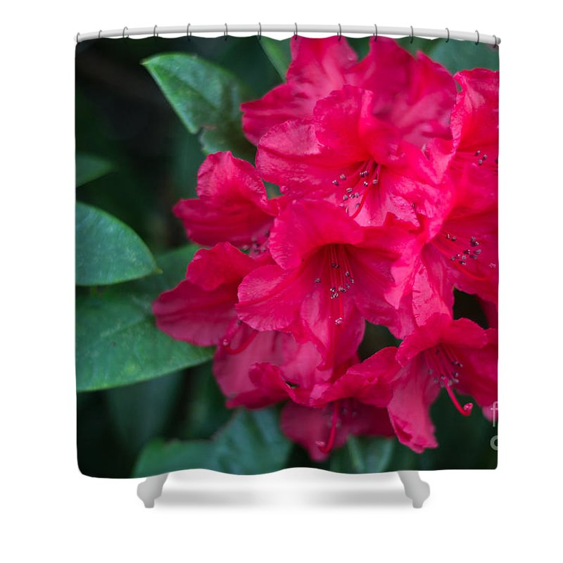 Flowers Shower Curtain featuring the photograph Flaming Pink by Suzanne Luft