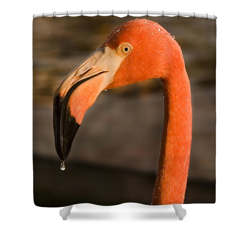 3scape Shower Curtain featuring the photograph Flamingo by Adam Romanowicz