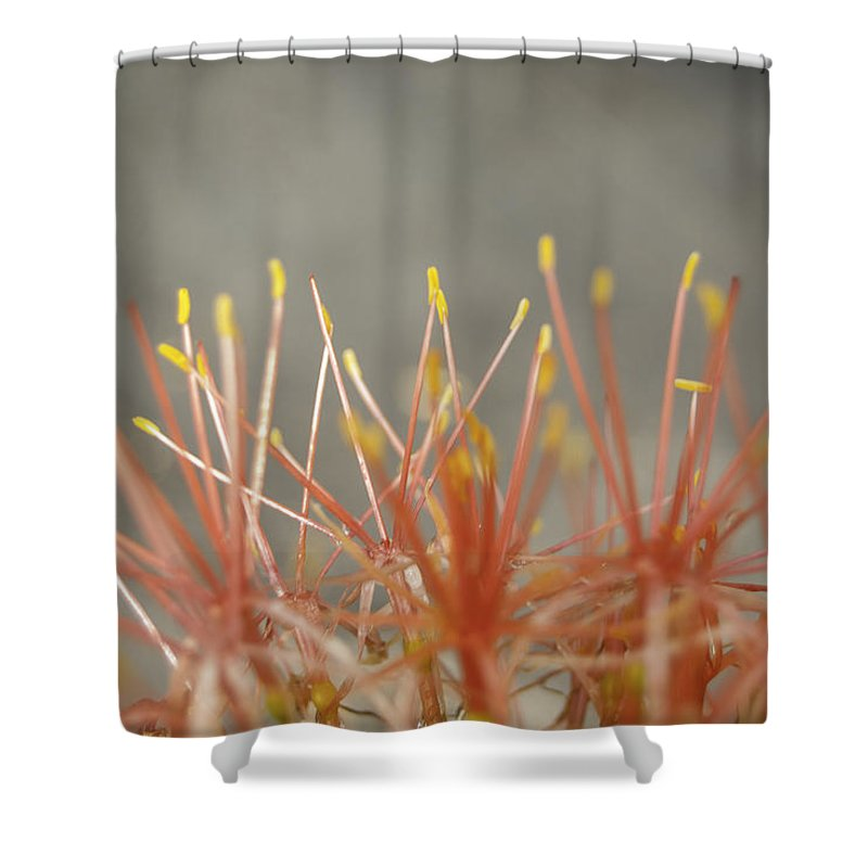 Flower Shower Curtain featuring the photograph Flashdance by Judy Hall-Folde