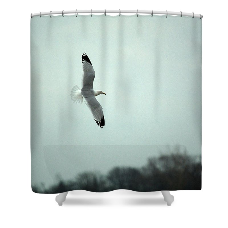 Seagull Shower Curtain featuring the photograph Flight by Linda Kerkau
