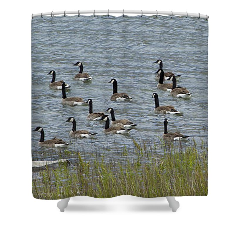 Birds Shower Curtain featuring the photograph Flock Of Canada Geese  #7116 by J L Woody Wooden