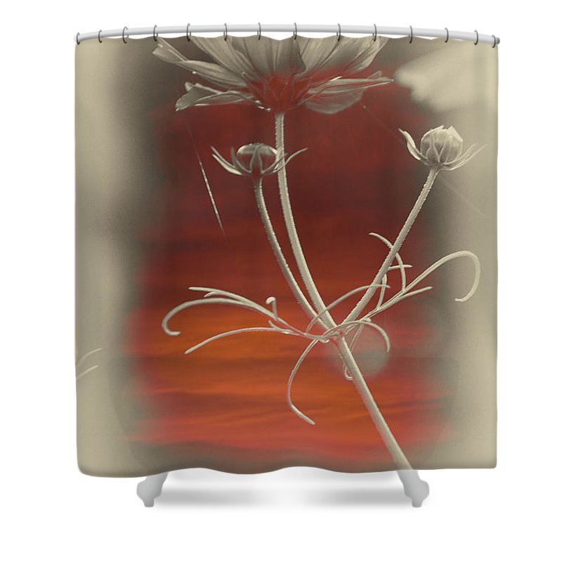 Floral Shower Curtain featuring the photograph Floral Early Garden Light 12 V by Thomas Woolworth