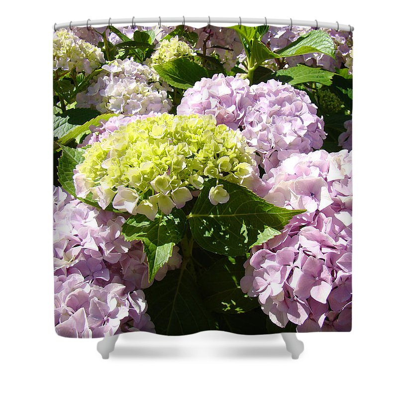 Nature Shower Curtain featuring the photograph Floral Pink Lavender Hydrangea Garden Art Prints by Baslee Troutman