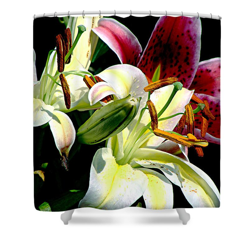 Floral Shower Curtain featuring the photograph Florals In Contrast by Ira Shander