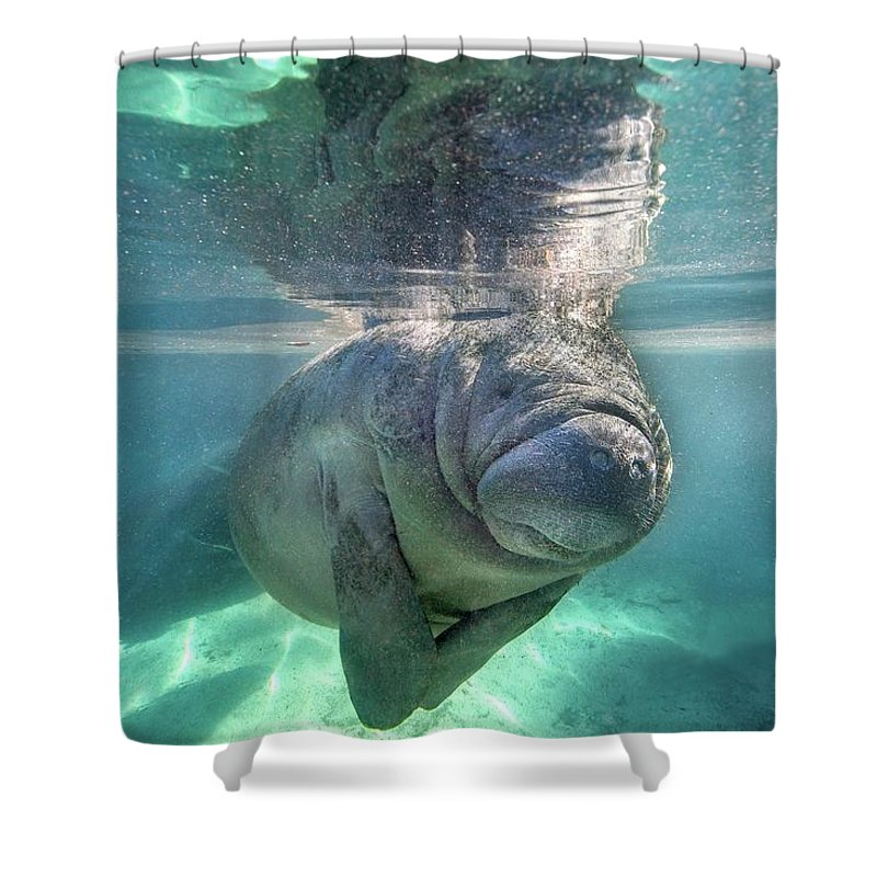 Underwater Shower Curtain featuring the photograph Florida Manatee by Ai Angel Gentel