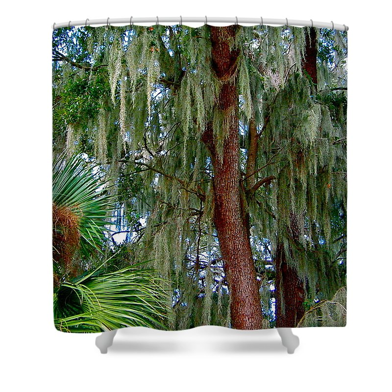 Tree Shower Curtain featuring the photograph Florida Trees by Denise Mazzocco
