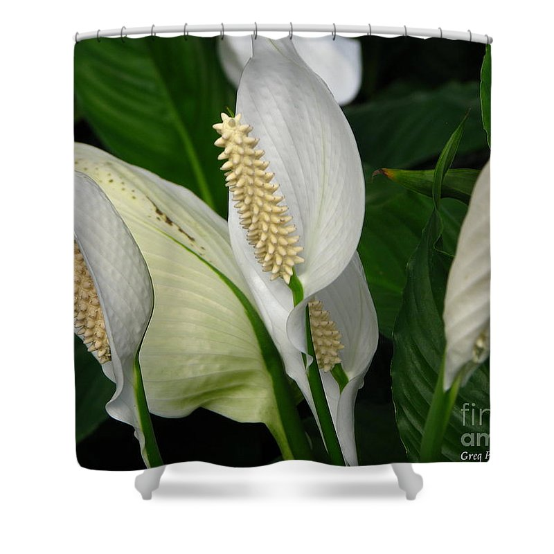 Art For The Wall...patzer Photography Shower Curtain featuring the photograph Flower Art by Greg Patzer