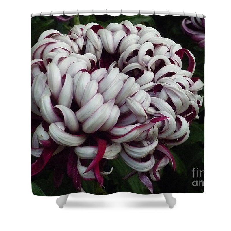 Nature Shower Curtain featuring the photograph Flower Basket With Purple Texture by Lingfai Leung