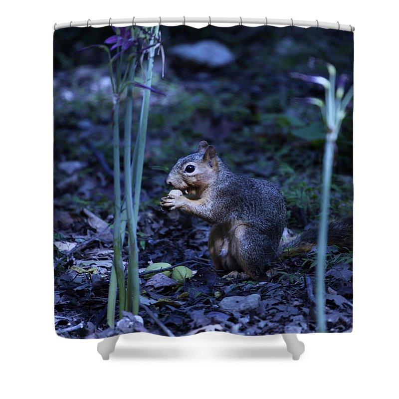 Flower Shower Curtain featuring the photograph Flower Fantasy-land by Douglas Barnard
